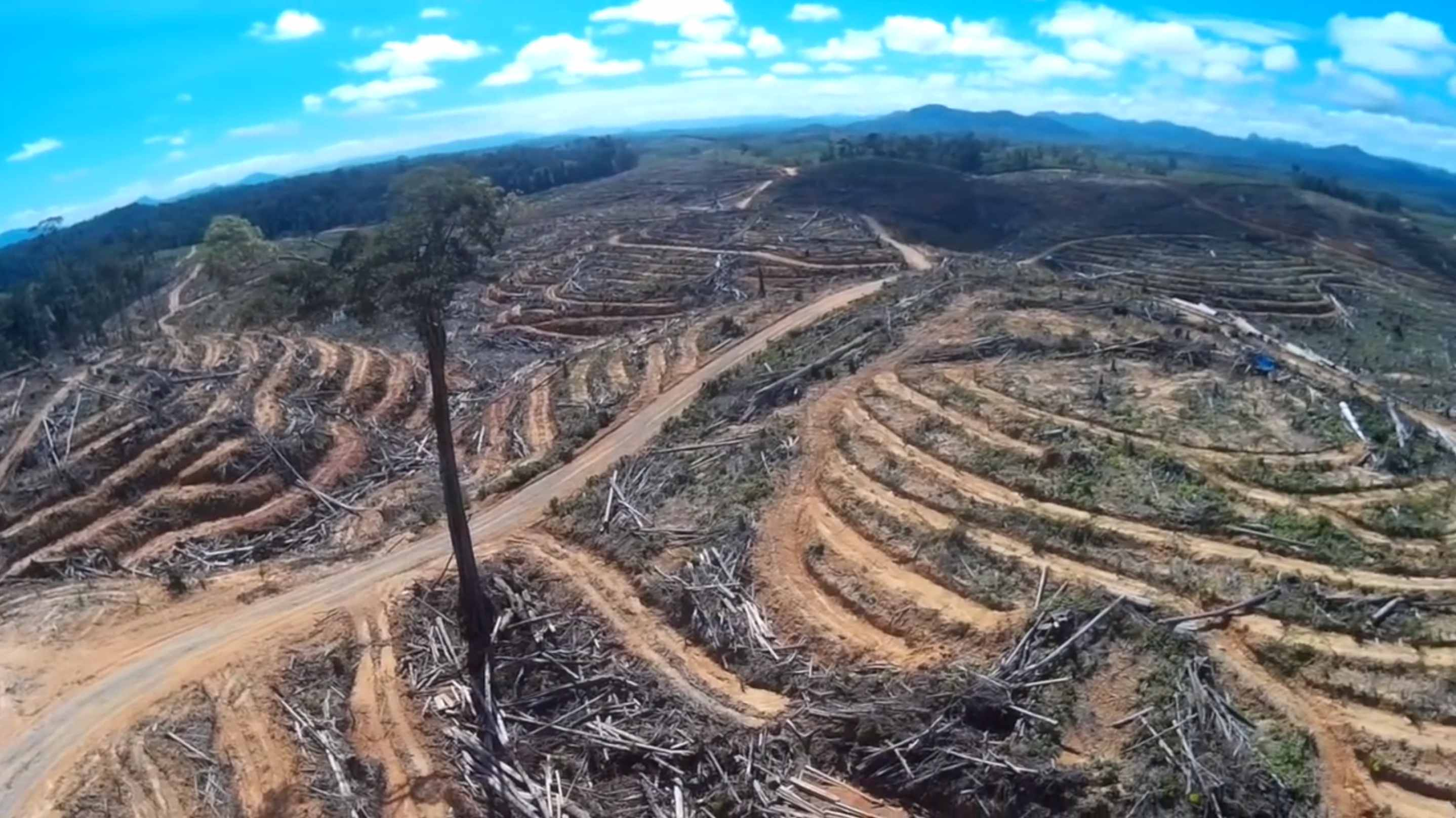 Drone Footage Shows Devastating Scope of Deforestation for Palm Oil in Indonesia