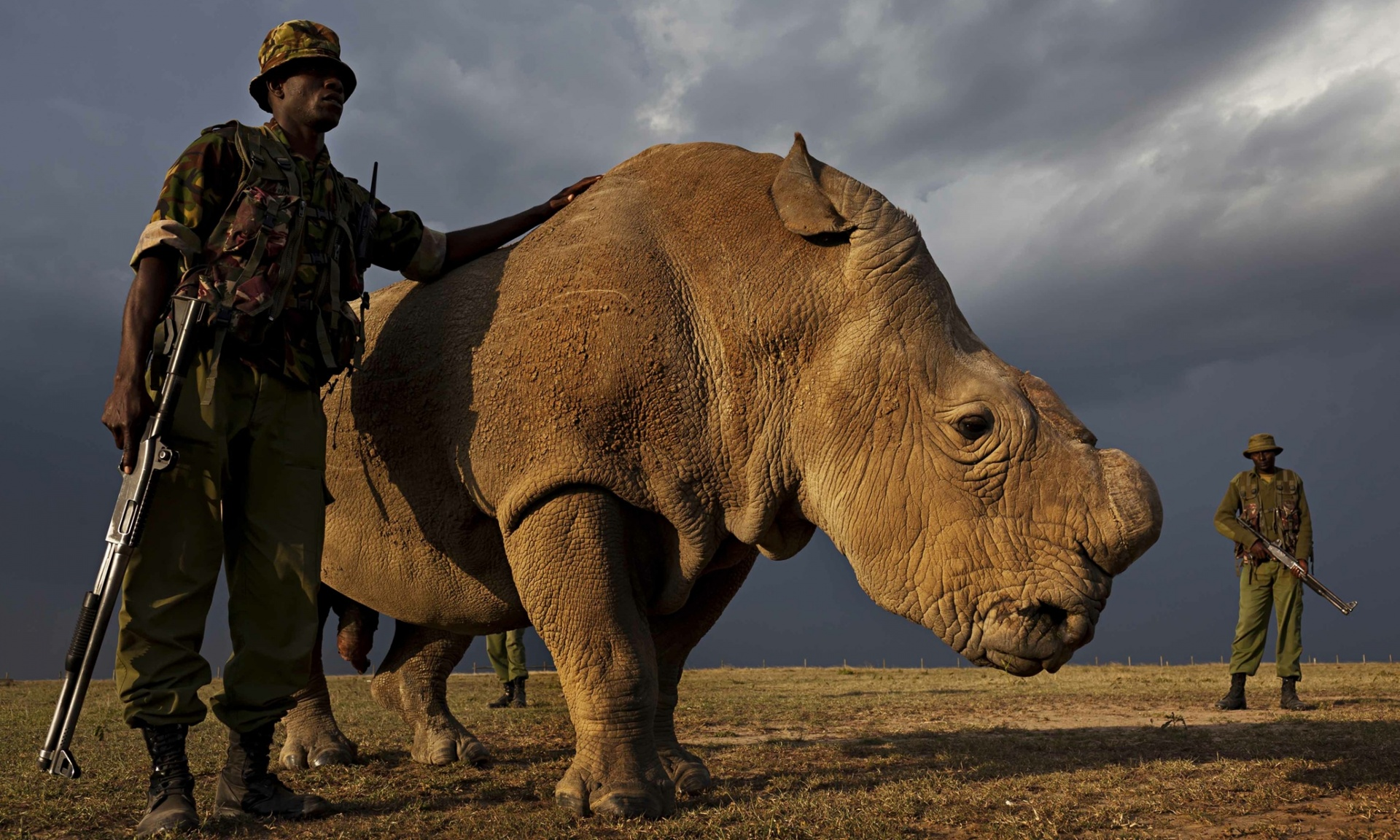 World's Last N. White Rhino Male Remains Under Armed Guard — Now, Can Scientists Save the Species?