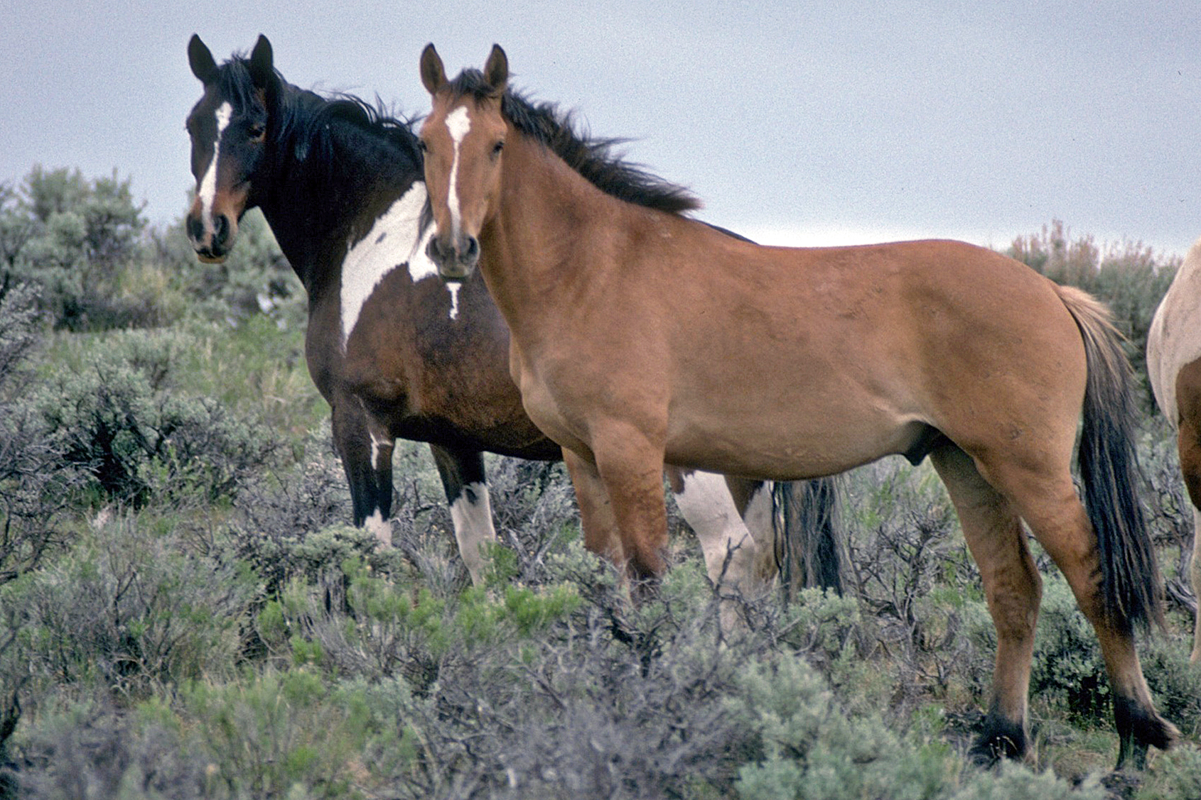 Group Files Legal Petition to Stop the Use of Sterility-Inducing Pesticide PZP on Wild Horses
