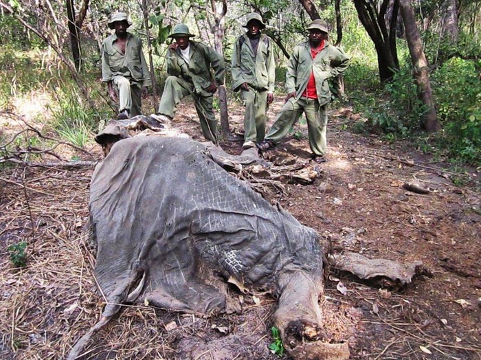 Tanzania's Elephant Bloodbath — Sand Runs Red as 2/3 of Population Killed by Ivory Raiders in 5 Yrs