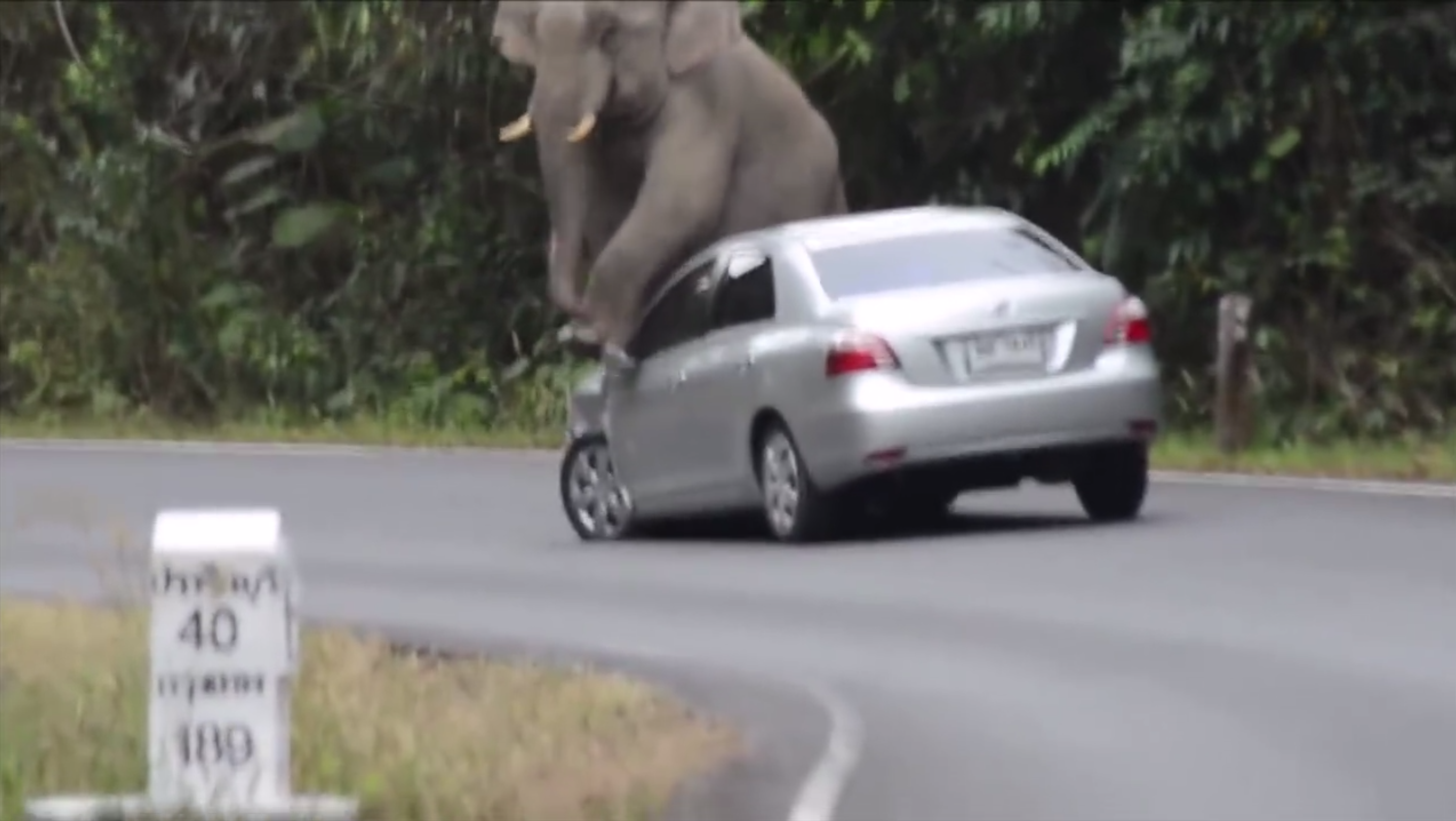 Video: Juvenile Elephant Rams, Stomps and Crushes Car Like Tin Can