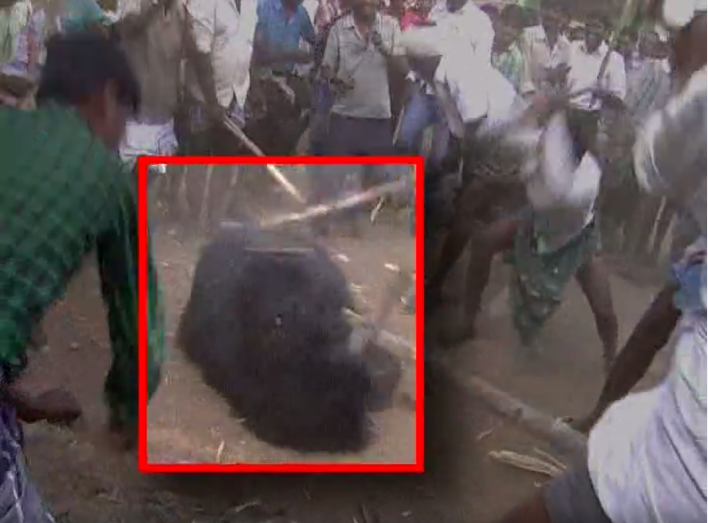 Video: Villagers Gang up, Attempt to Beat Bear to Death With Sticks in India