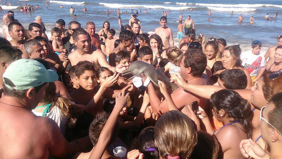 Video: Beachgoers Pass Around And Kill Endangered Baby Dolphin For Selfies