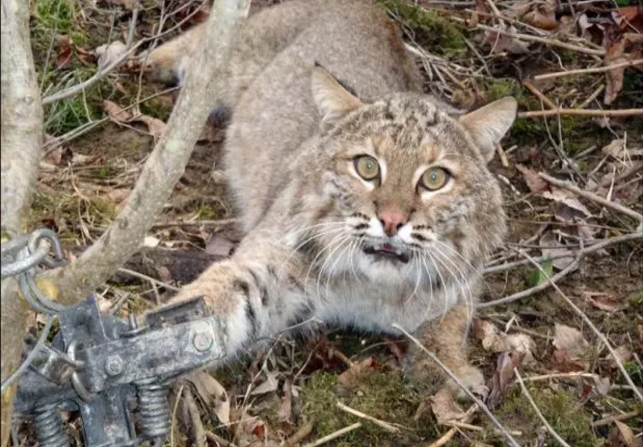 'Secret' Federal Agency Admits Killing 3.2 Million Wild Animals in U.S. Last Year Alone