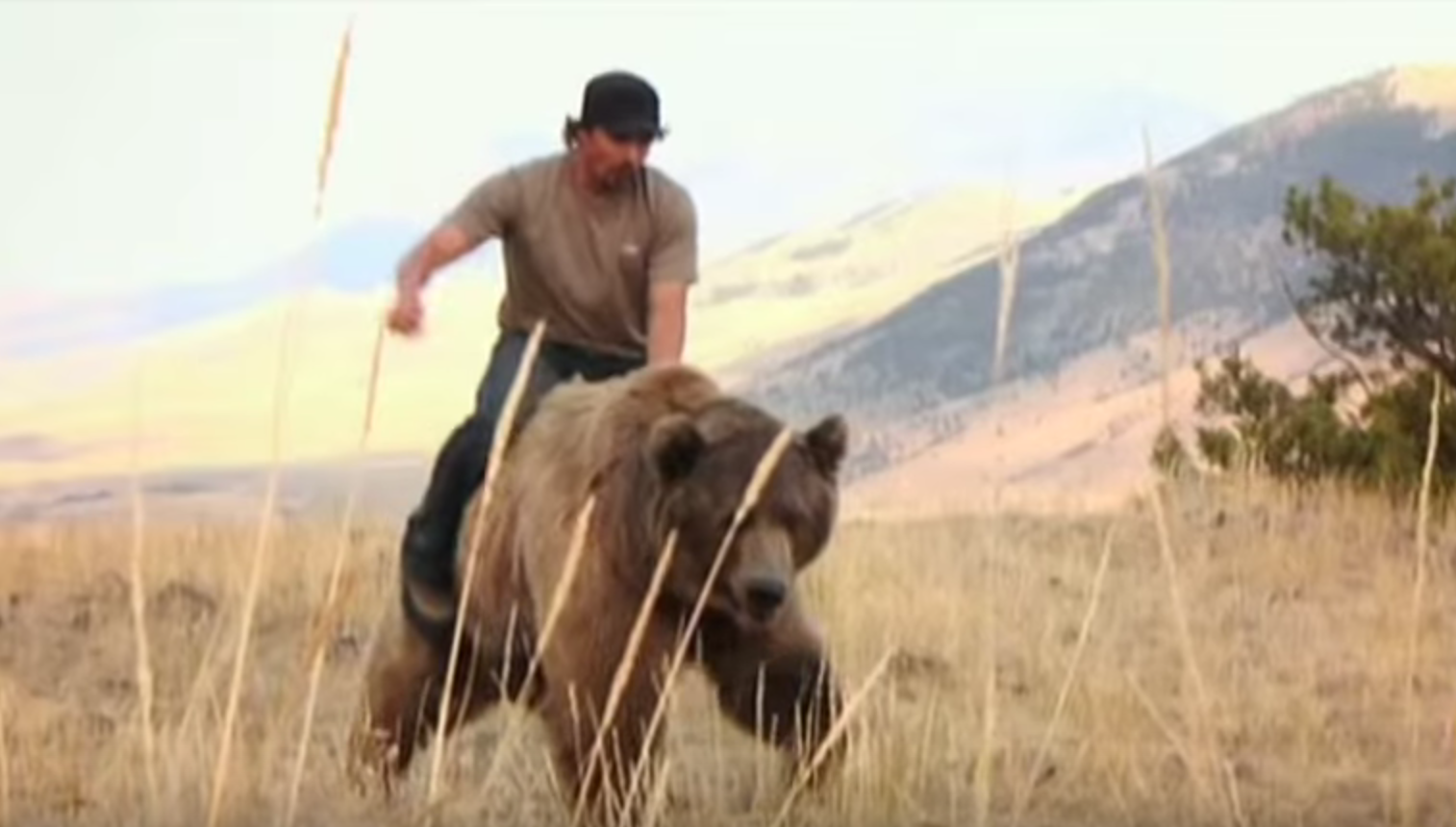 VIDEO: This Man Walks AND RIDES A 900 Lb. Grizzly Bear Through The Forests Of Montana