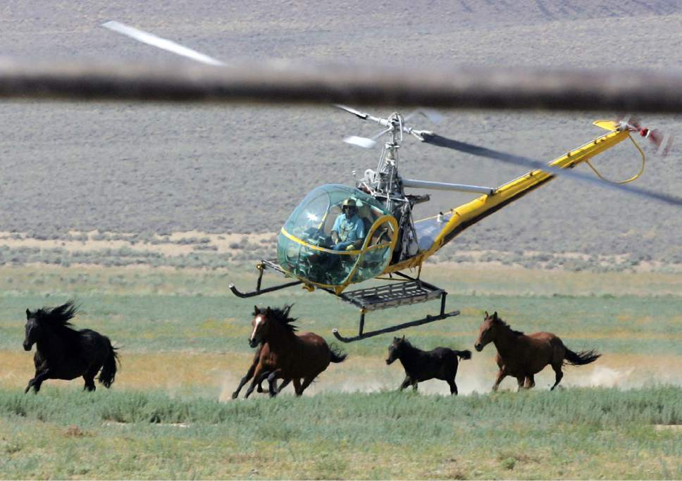 POLL: Should The U.S. Government Send Any Wild Horses To Be Slaughtered At All? VOTE NOW!