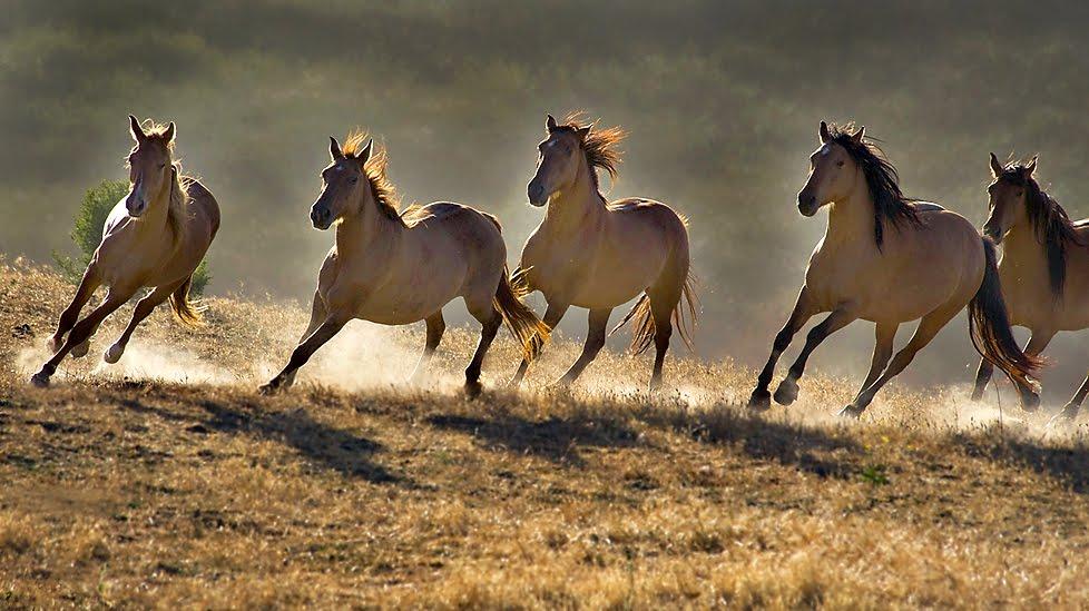 Wild Horses Roaming the Western Range