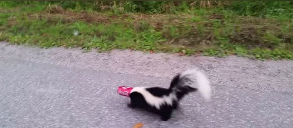 Dramatic Video Goes Viral: Brave Man Saves Poor Panicked Skunk With Head Stuck in Coke Can