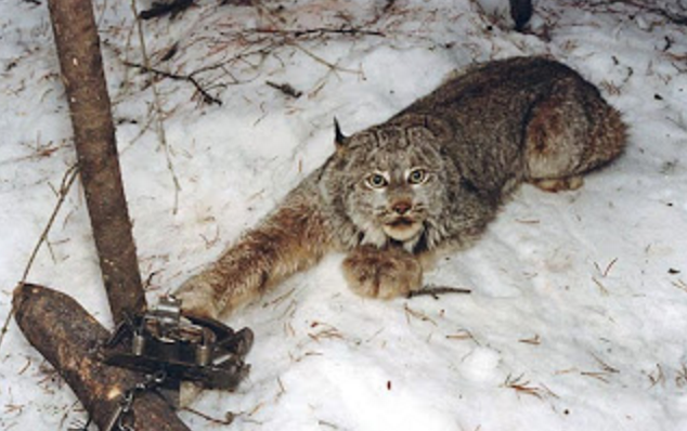 After a Century, 'Landmark Settlement' Puts Brakes on Federal Government's 'Rogue' Wildlife-Killing Program