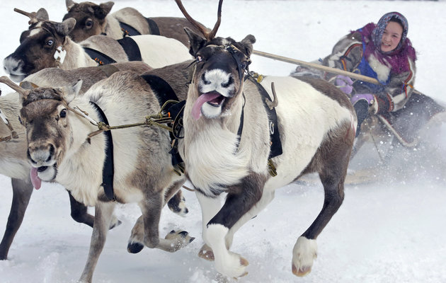 Nenets Woman in Reindeer Sleigh -- Photo: Associated Press