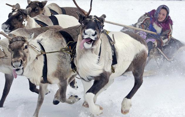 Nenets Woman in Reindeer Sleigh -- Photo: Associated Press