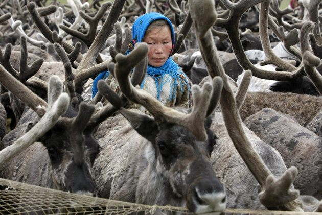Nenets Woman Herding Reindeer -- Photo: Denis Sinyakov, Reuters