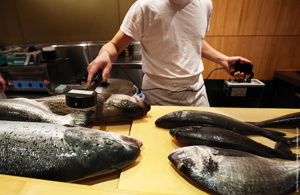 Testing Fish for Radiation in Sushi Restaurant