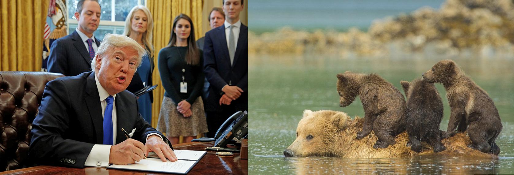 Bill Allowing Slaughter of Alaskan Bear Cubs, Wolf Pups, Sails Through Senate to Trump's Desk