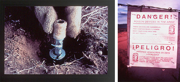 20 Environmental Groups Jointly Demand Wildlife Services Ban M-44 Cyanide Bombs in Idaho
