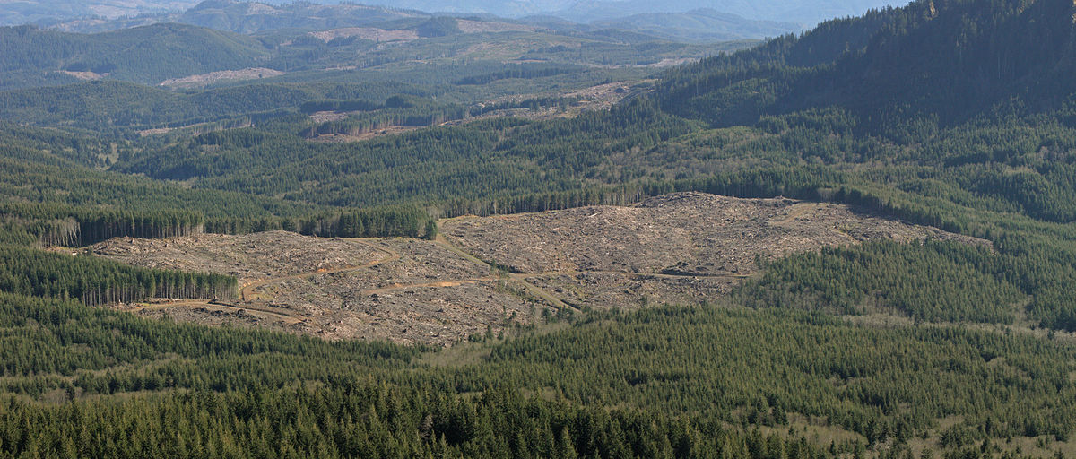 Forest Conservation Report: U.S. Gov. Severely Underestimating Impact of Logging on Climate