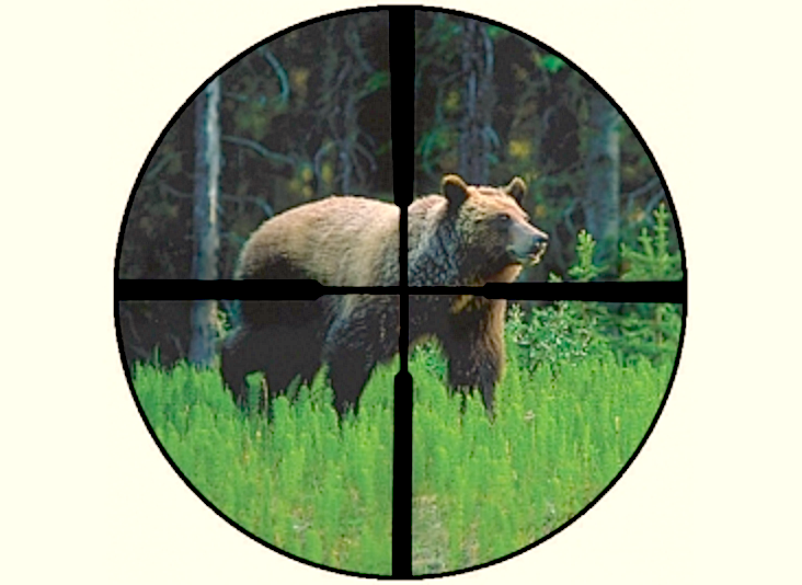 Trump Admin Stripping Yellowstone Grizzly of 'Endangered' Protection, Opening Door for Hunting