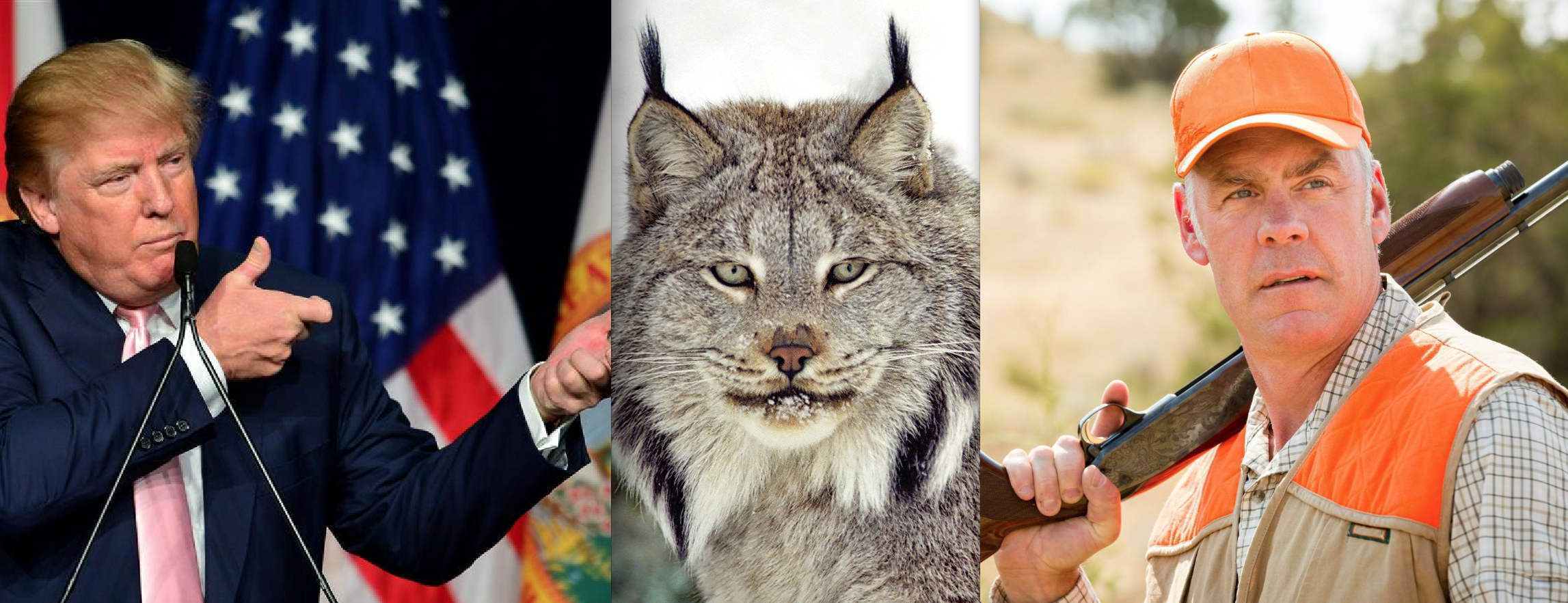 Trump Admin Announces It Will Strip Canada Lynx of Endangered Species Protection