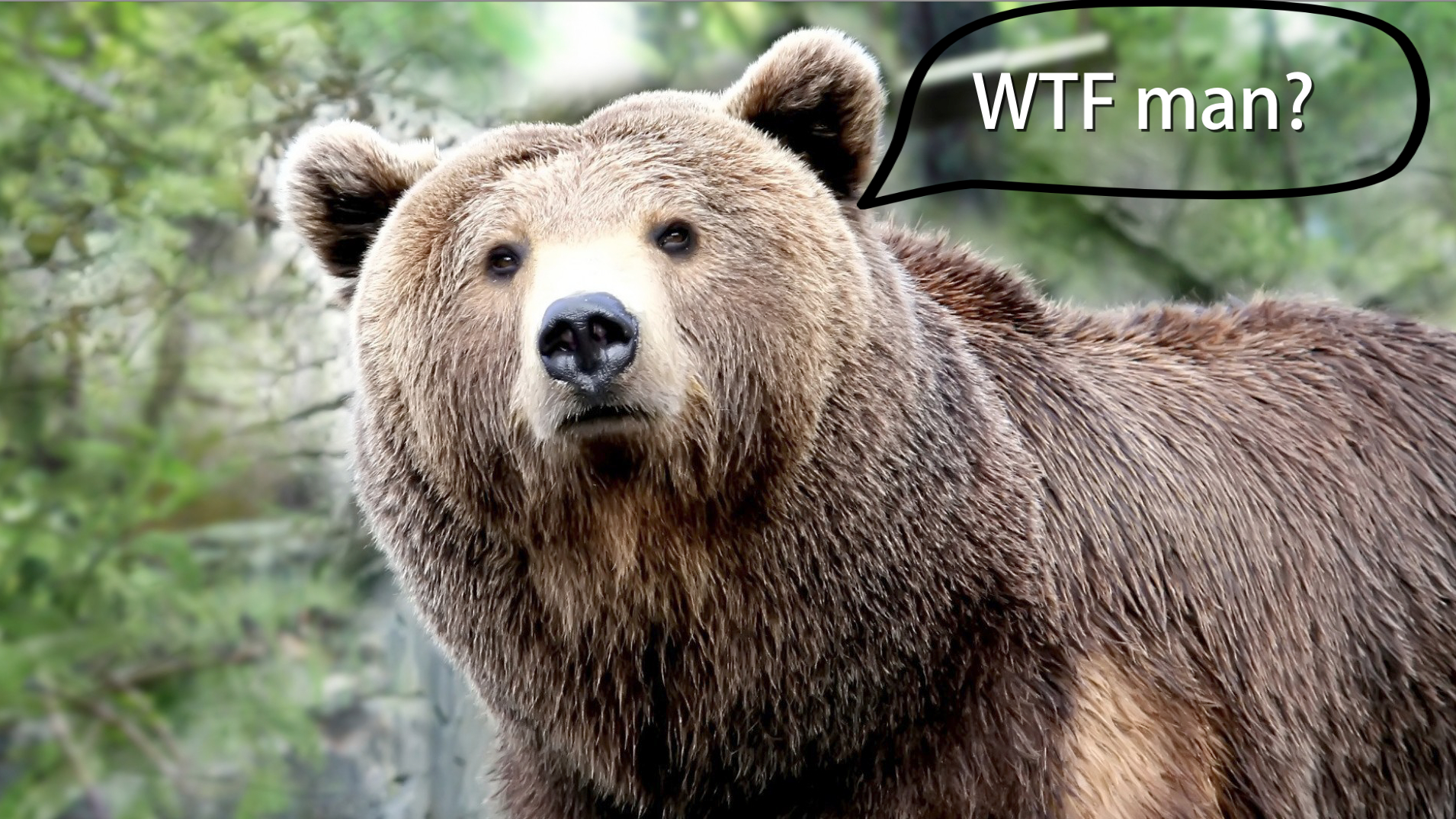 Idaho to Open Grizzly Hunting Season So Yokels Can Kill One Male Bear in Name of 'Management'