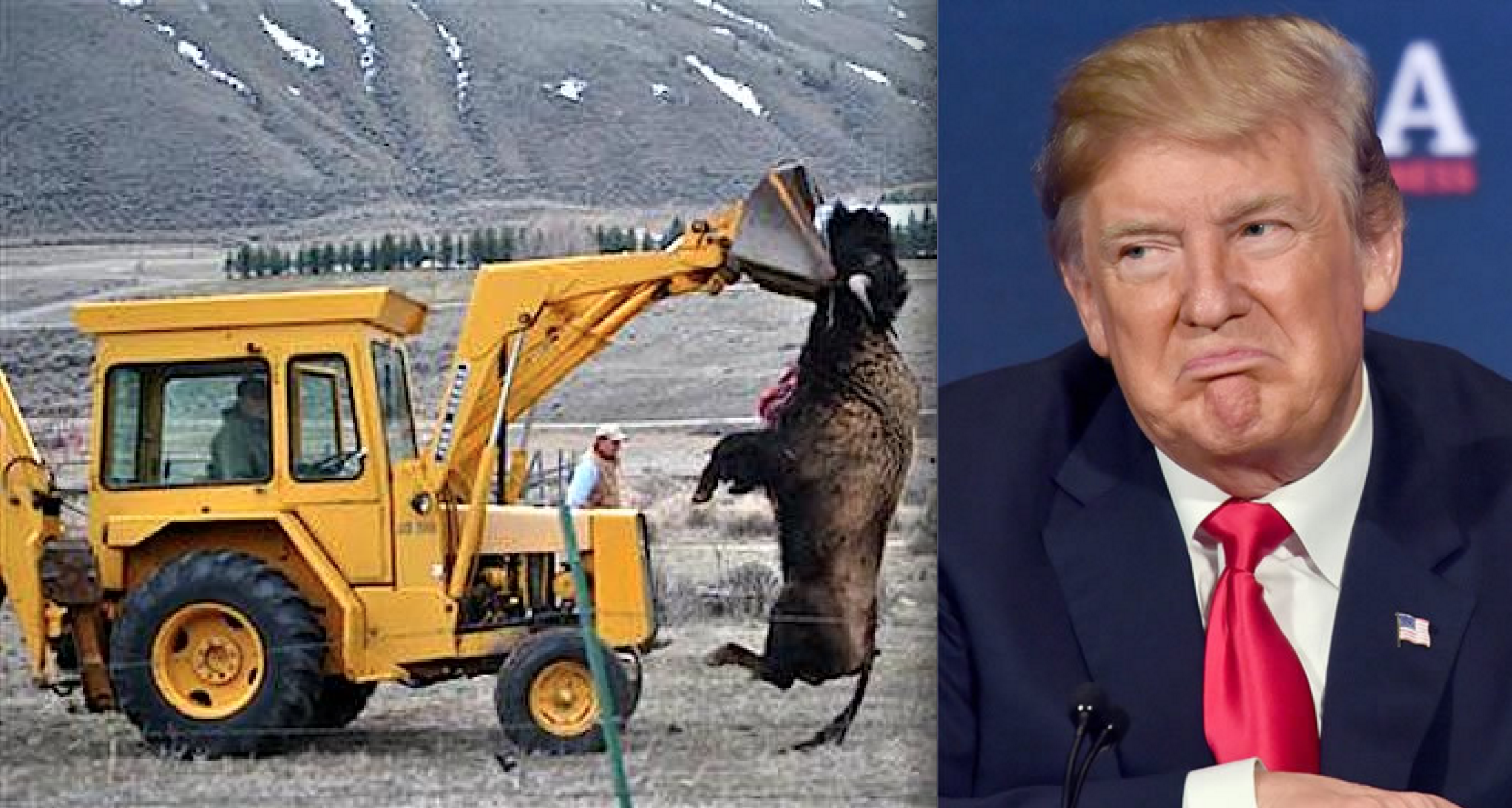 Trump Admin. Just Denied Yellowstone Bison Endangered Species Protection, Sparking Outrage