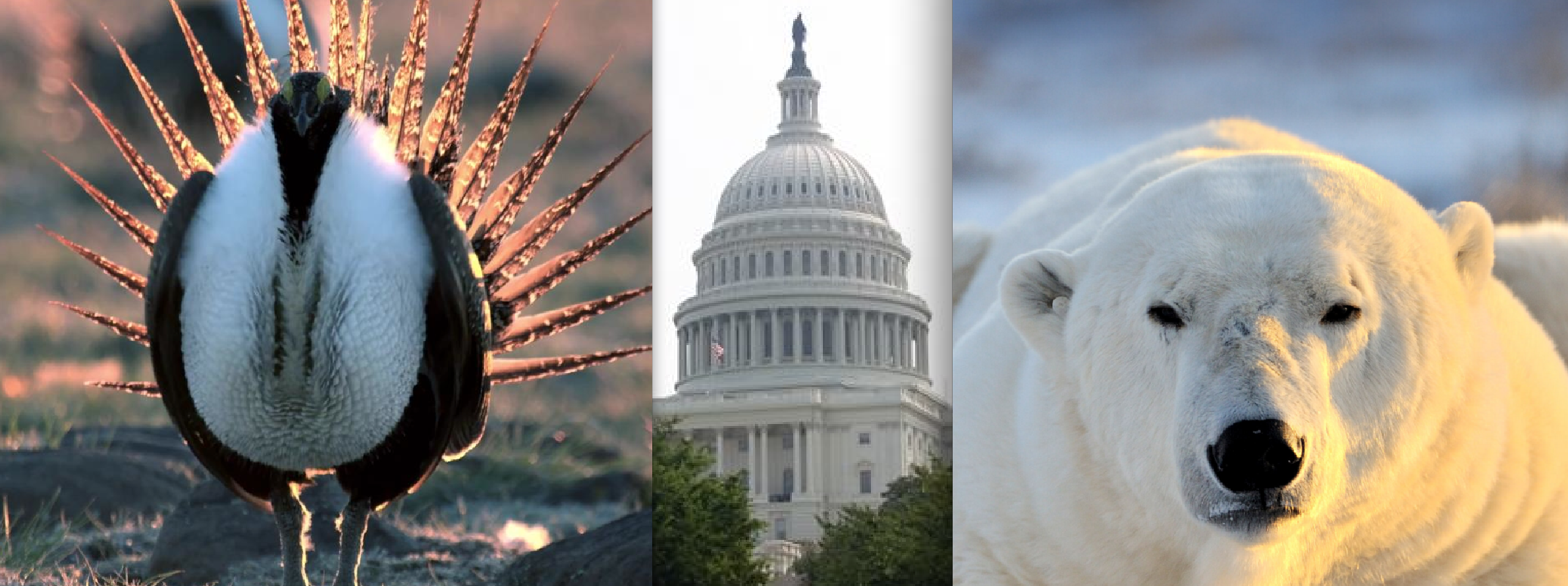 Dems Introduce 'PAW and FIN' Bill to Kibosh Trump Admin Assaults on Endangered Species Act