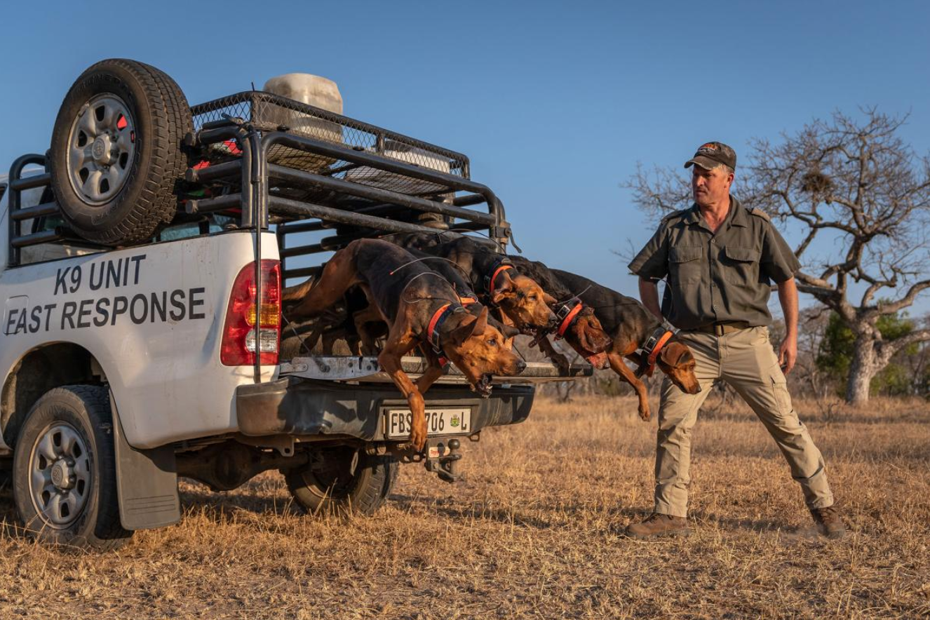 Texas Pack Hounds Charge to the Rescue for Rhinos in South Africa, Nabbing 145 Poachers So Far