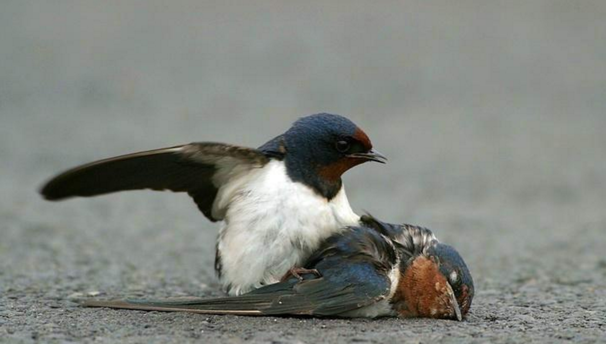 This Story is for the Birds: Humans Demolish North American Avian Population by 3 Billion Birds over 50 Yrs.