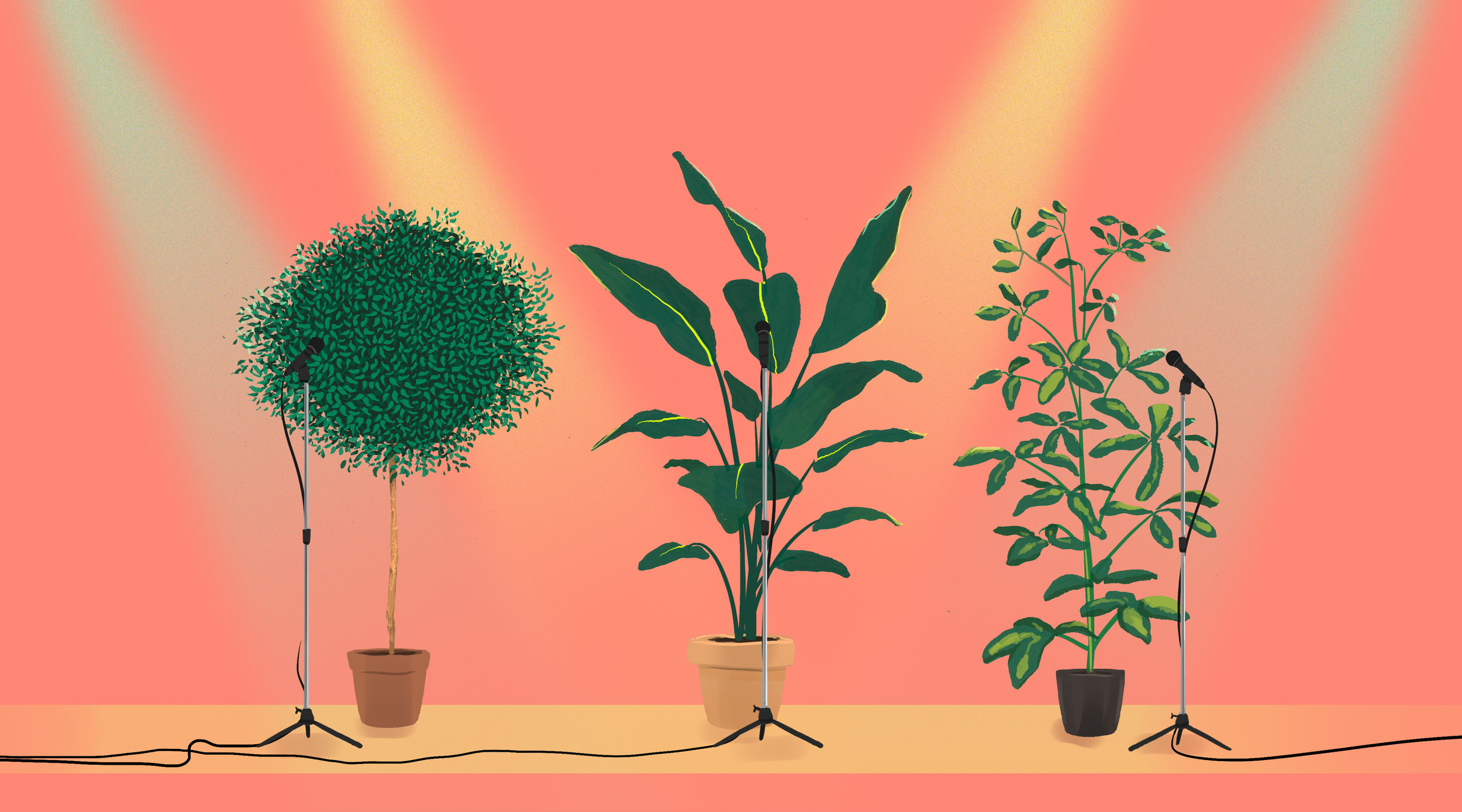 Study Suggests Plants Have Some of the Same Senses as Animals and Make Sounds Humans Can't Hear but Wildlife Can