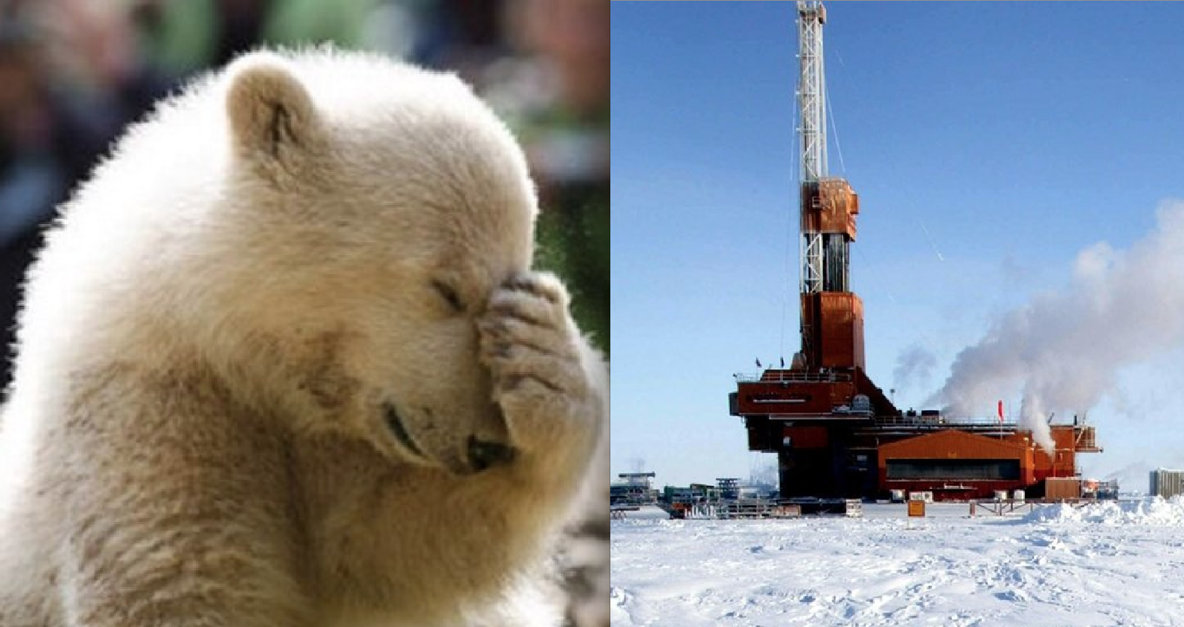 Trump Admin Approves Drilling Plan for Arctic National Wildlife Refuge as Big Banks, Oil Investors Flee