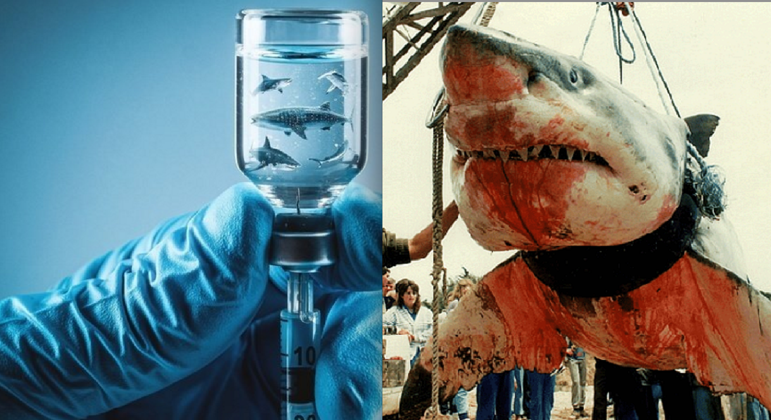 Petition Watch: Petition Aims to Stop 500,000 Sharks from Being Killed for COVID-19 Vaccines