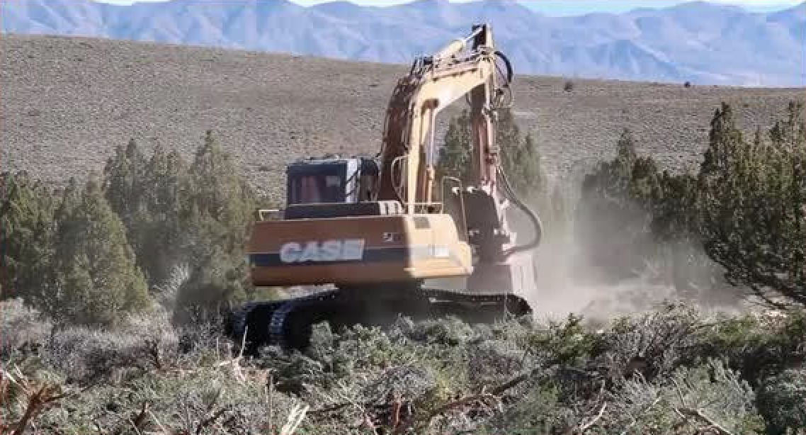 'Scorched Earth': In Final Days, Trump Admin Finalizes Sweeping Clearcutting Rule Across West, While Cutting Public out of the Process