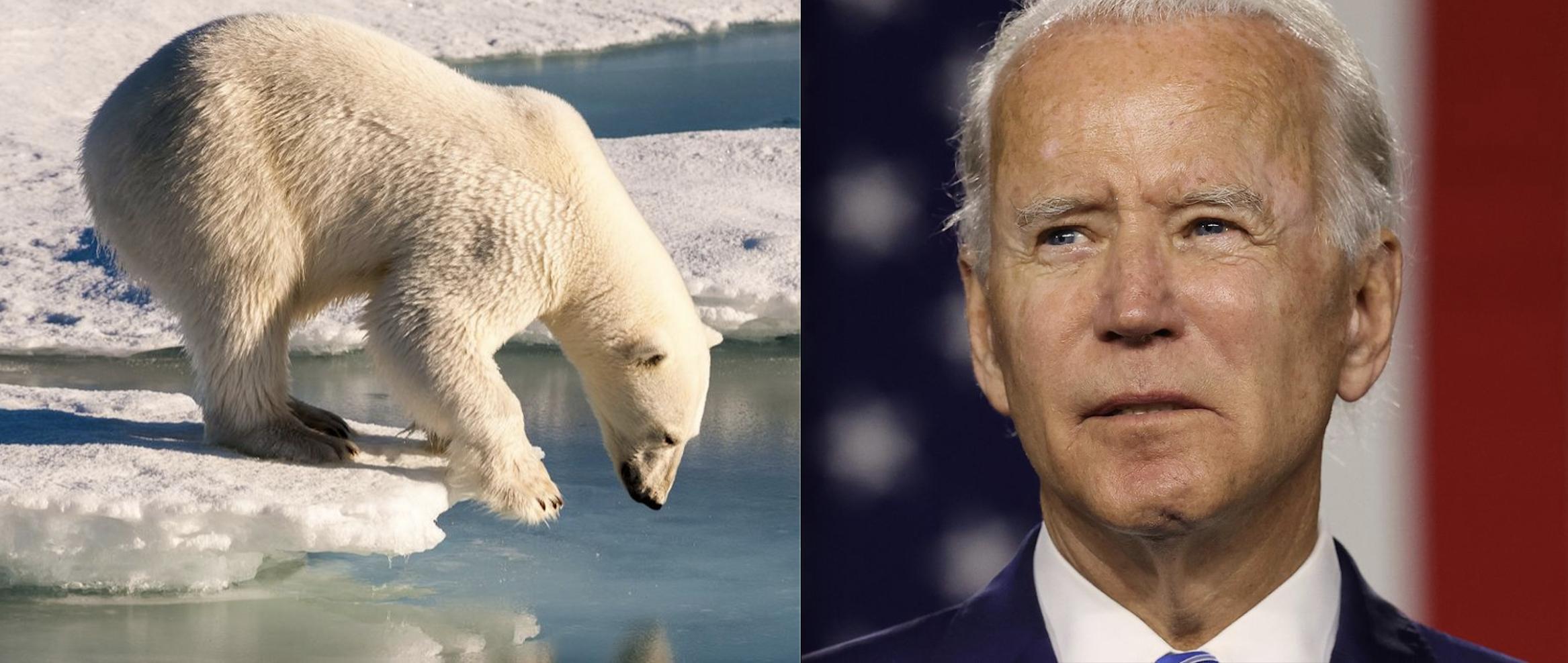 With Trump's Late-Term 'War on Wildlife,' 135 NGOs Implore Biden for E.O. to Slow the 'Extinction Crisis'