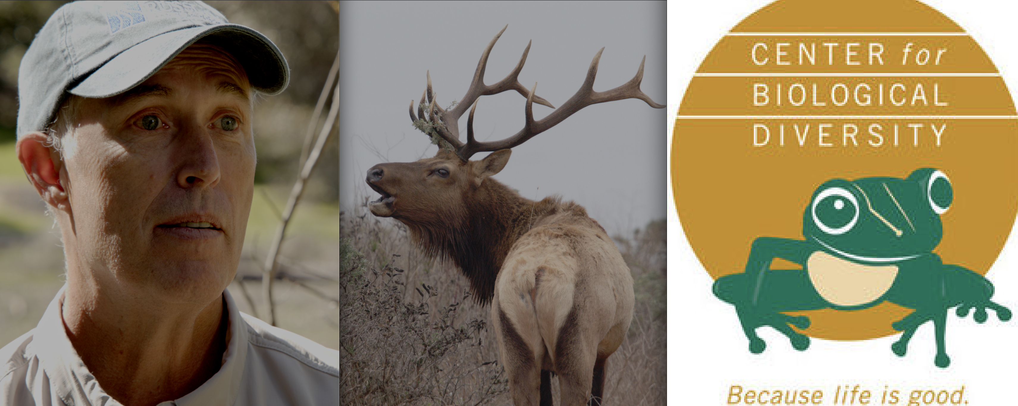 Center for Biological Diversity Lambasts Rep. Jared Huffman in Scathing Rebuke over Tule Elk Comments in Letter to The Editors