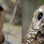 Trump Tried to Rip off N. Spotted Owl of 3.4M Acres of Habitat; Rep. Huffman, Haaland, Dem Lawmakers Say No Way